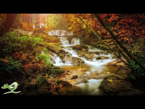 Relaxing Celtic Music: Sleep Music, Flute Music, Meditation Music, Beautiful Relaxing Music ★86