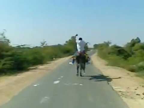 Xxx Mp4 Horse Riding By Bharatbhai Khachar 3gp 3gp Sex