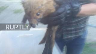 Russia: Tarred fox cub rescued from certain death by Yekaterinburg residents