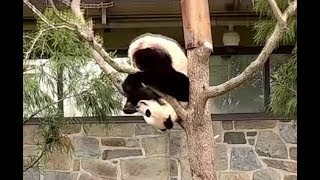 Bei Bei Visits Momma