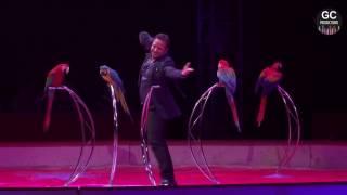 Alessio et ses perroquets: Etoile d'Argent du Festival du Cirque 2016