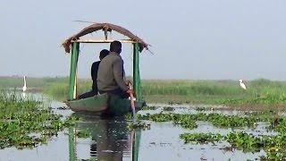 Boating & Birding at Mangalajodi Wetlands HD - Chilika Lake, Odisha