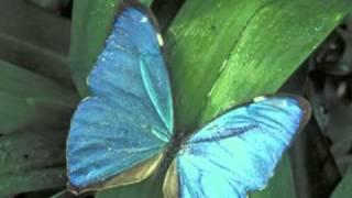 As mais lindas e fascinantes Borboletas. The most beautiful butterfly! [parte 1]