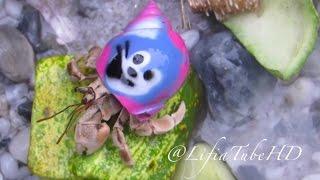 Mainan Anak anak ❤  Umang umang ( Hermit Crab ) Masha, Hellokitty