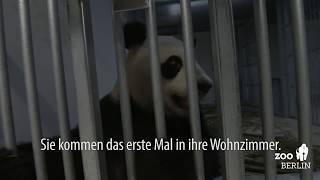 Umzug in die Panda-Lounge - Discovering the panda lounge