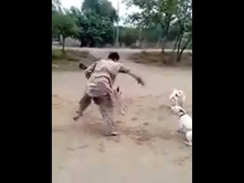 Pashto funny video Pathan Cheating 3 Dogs At Same Time