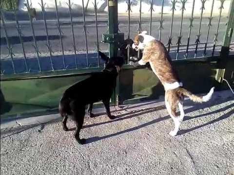 Xxx Mp4 Protective Dog Xx 3gp Sex