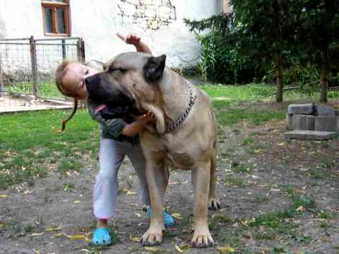 DOGO CANARIO PUMA & BABY BOGI