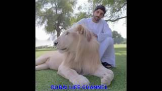 FAZZA with pets.Lion.Horse.Camel.Falcon.Elephant |||| Dubai Life