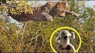 intenta no llorar ANIMALES HÉROES. Los videos más EMOCIONANTES del MUNDO! Animales salvando a otros