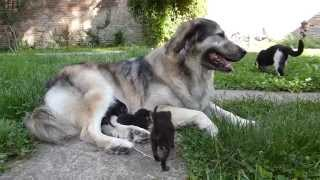 Gomila macica i pas :)