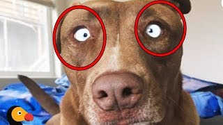 هل تعلم لماذا نهانا النبي ﷺ عن تربية الكلاب في البيوت ؟ سبحان الله