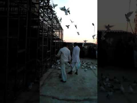 Xxx Mp4 High Flying Kabutar Kota Rajsthan Baziii 301 Pehle Bar 3gp Sex