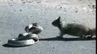 squirrel-vs-snake