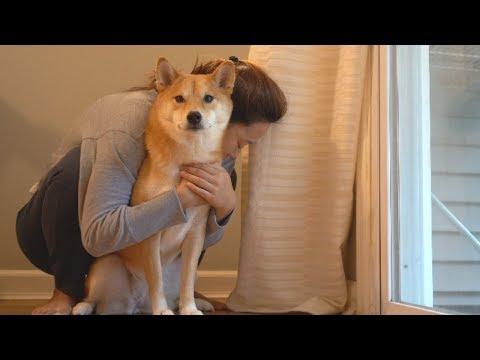 Xxx Mp4 Hugging My Dog A Little Too Long 3gp Sex