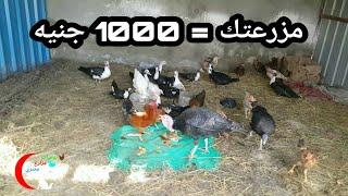 ازاي تعمل مزرعة باقل من1000 جنيه؟!🤔