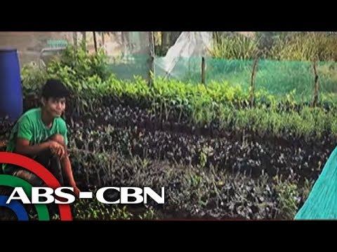 TV Patrol: Agrikultura, patok pa rin sa ilang kabataan