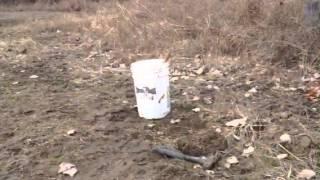 How to trap a possum 101