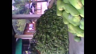 উত্তর টাঙ্গাইল তথা ধনবাড়ি ভুয়াপুর এর চরাঞ্চল এবং জামালপুর এর দক্