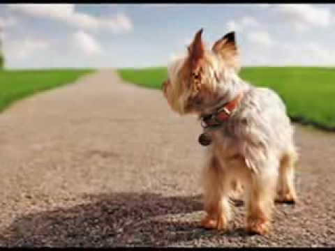 El Diario de un Perro Refleccionen