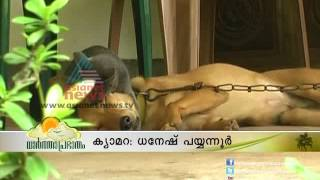 """Friendship between a dog and a cat""-Asianet News Lens"