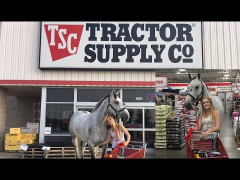 Xxx Mp4 I TOOK MY HORSE INTO A TRACTOR SUPPLY STORE 3gp Sex