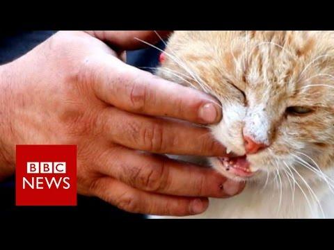 Xxx Mp4 The Cat Man Of Aleppo BBC News 3gp Sex