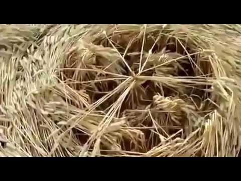 Ovni UFO real filmado haciendo círculos en las cosechas