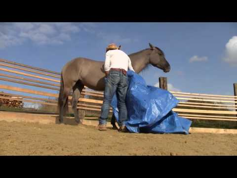 Mounted Archery  Horse Training / part 1 preview