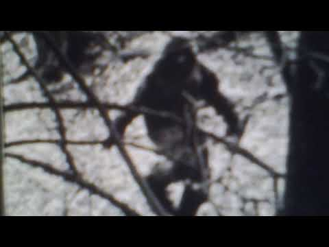 Xxx Mp4 Hunter Takes Photo Of Bigfoot While In His Tree Stand 3gp Sex