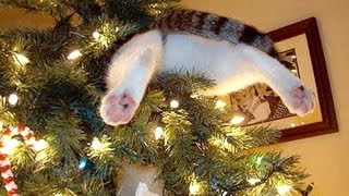You should have a PET and laugh every day - Funny ANIMAL compilation