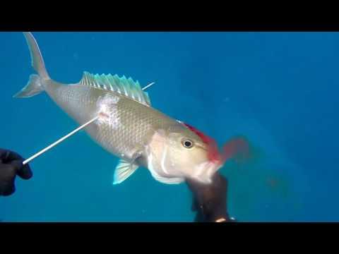 New Years in Hawaii spearfishing 2017