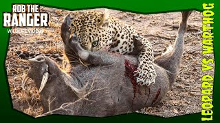 Leopard Vs Screaming Warthog! Incredibly Graphic Sighting!