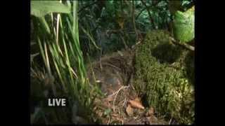 BBC Springwatch 2013 - Episode 6