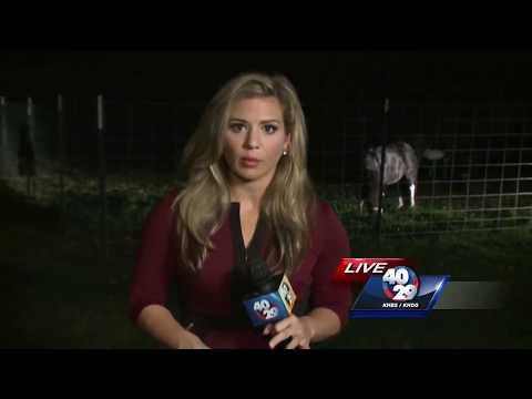 Xxx Mp4 Arkansas Man Accused Of Having Sex With Family 39 S Pet Donkey 3gp Sex