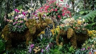 NYBG - Full The Orchid Show: Thailand 2017 - Part 5 of 7