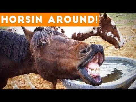 Funniest Horse Videos of 2018 Weekly Compilation Funny Pet Videos