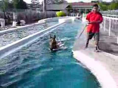 lims classic swimming