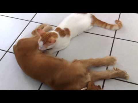 Xxx Mp4 Dog Breastfeeding A Cat 3gp Sex