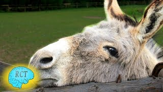 What is it and Why - G.K. Chesterton's The Donkey