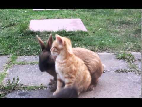Xxx Mp4 Attack Of The Cuddle Bunny XXX 3gp Sex