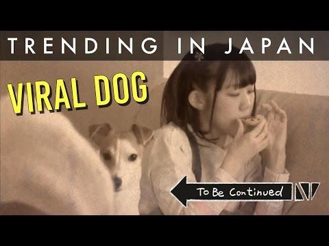 Japanese Time Stopping AV Dog Goes Viral on Twitter