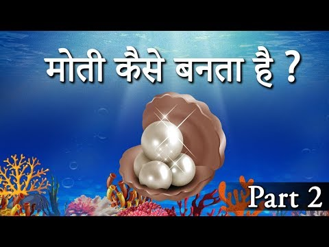 Xxx Mp4 मोती कैसे बनता है How Oysters Make Pearls How Are Pearls Formed Naturally 3gp Sex