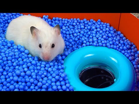 🐹 WORLD S LARGEST HAMSTER MAZE Obstacle course