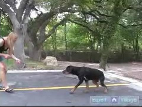 How to Train a Rottweiler : How to Train Your Rottweiler to Come When You Call