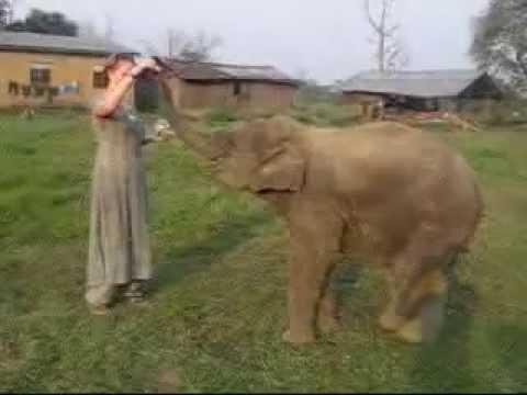 Xxx Mp4 Sexy Lady Self Feeding A Little Elephant Just Watch This Funny 3gp Sex