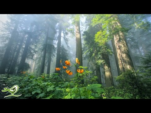 Beautiful Relaxing Music Peaceful Piano Music & Guitar Music by Soothing Relaxation