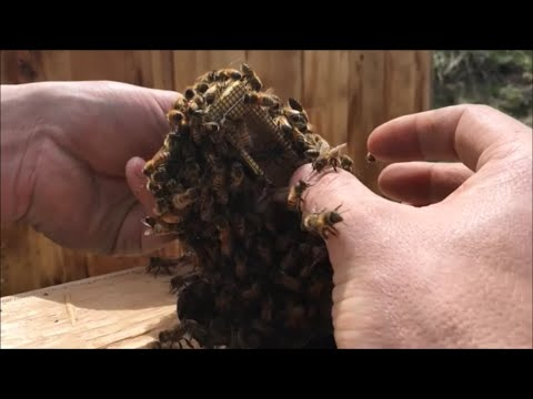 Xxx Mp4 Beekeeping With Cody 2016 Installing Bees 3gp Sex