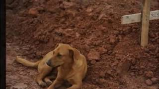 Heart Touching - Dog Owners Dies And Friend►100% People Cry