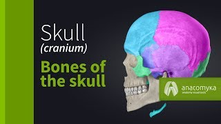 Skull (cranium) - Overview of the bones of the skull (3D animation)
